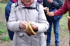 les-bananes-de-la-cipale